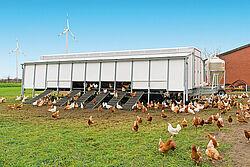 Nave móvil con gallinas ponedoras en producción alternativa campera y manejo en suelo