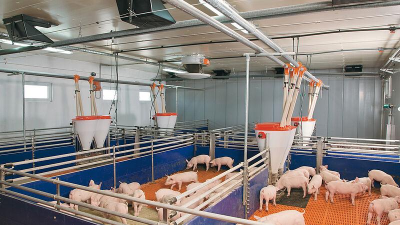 Sistemas de alojamiento para la cría de porcinos (alimentación seca)