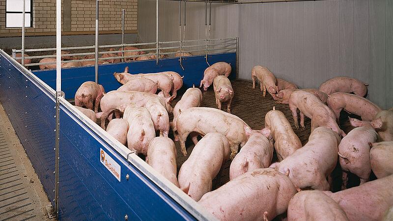Instalaciones porcinas: Granja de engorde de cerdos con alimentación líquida HydroMix