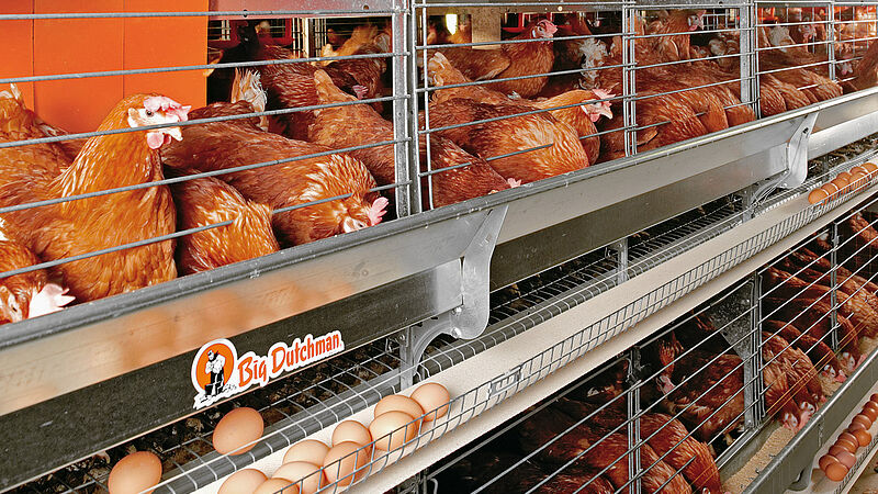 Colony-EU: Equipamiento avícola para Europa