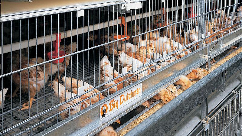 UNIVENT-Starter - crianza efectiva de gallinas jóvenes