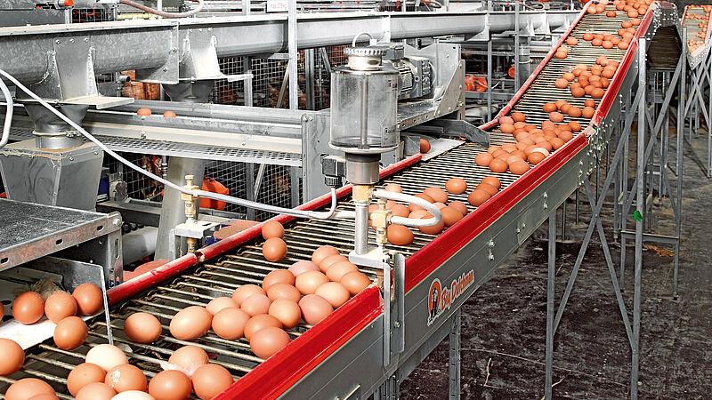 Recolección de huevos