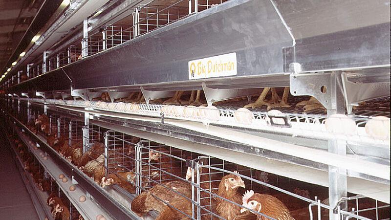 Producción de huevos en el UNIVENT