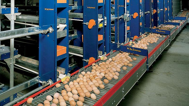 Sistema sube-y-baja para la producción de huevos en naves avícolas