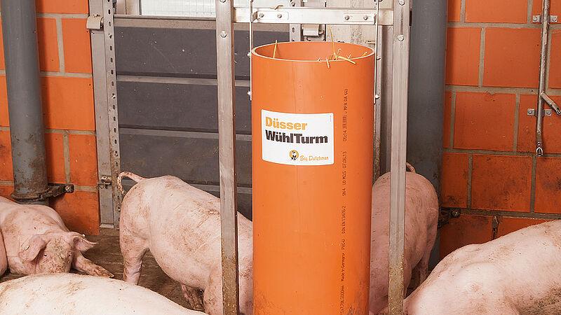 Material ocupacional en el engorde de cerdos