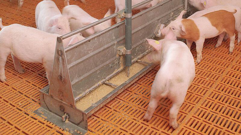 Manejo de cerdos: HydroMix Sensor (alimentación líquida)