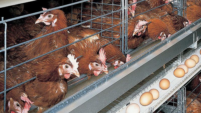 Producción de huevos con UNIVENT